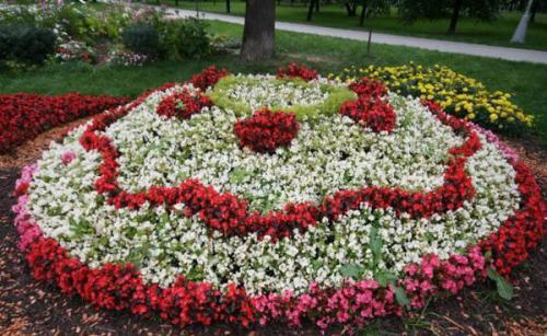 Яркий цветник из многолетников. Однолетники или многолетники — критерии выбора